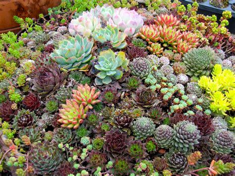 cactus garden beautiful indoor or outdoor cactus garden designs orchidlagoon com