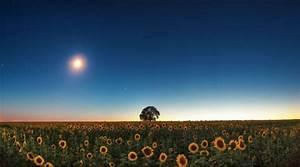 Jardiner Avec La Lune : jardinage suivez le calendrier lunaire gazon ~ Farleysfitness.com Idées de Décoration