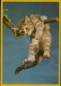 hang in there cat hang in there white cat coaching
