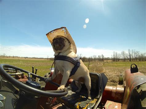 Boat Driving Or Riding by Atom The Pug Drives A Construction Truck Rides A Horse