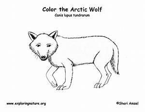 Free coloring pages of arctic tundra