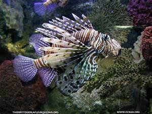 fond d 233 cran de loire atlantique le croisic aquarium du