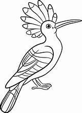 Hoopoe Coloring Pages Sits Animal Vector Illustration Drawings Vectors 1024px 97kb sketch template