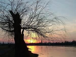 Baum Am Wasser : kostenloses foto dresden elbe baum wasser ~ A.2002-acura-tl-radio.info Haus und Dekorationen