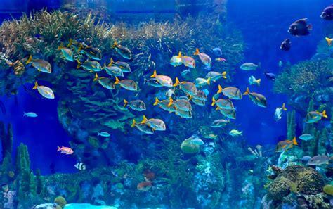 Aquarium An Der Wand by Aquarium In Der Wand Aquarium Ideen 108 Designs Zum