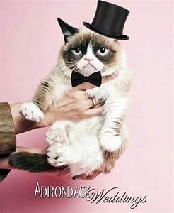 33 best Kitty Cat Weddings images on Pinterest | Grumpy ...