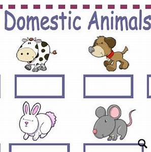 Domestic Animals Pictures For Kids
