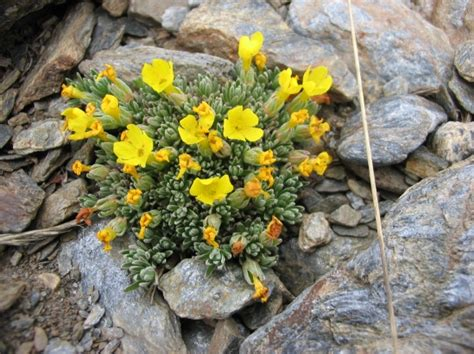 plants of mountains oh noes global warming has driven europe s mountain plants to migrate 2 7 m upwards in 7 years