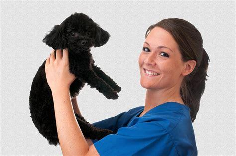 veterinary assistant  training program blackstone