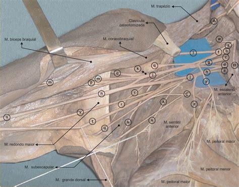 pin en anatomia humana