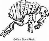 Flea Clipart Clip Siphonaptera Fleas Illustrations Illustration Cartoon Drawings Sketch Drawing Vectors Vector Royalty Dog Eps Gograph Idea Arthropods Clipground sketch template