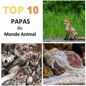 Top 10 Des Meilleurs 4x4 : top 10 des meilleurs p res du monde animal ~ Medecine-chirurgie-esthetiques.com Avis de Voitures