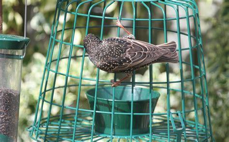 starling big bird resistant feeders bird cages