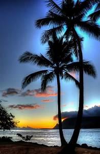überwintern Von Palmen : super sch ne bilder von palmen blauer sch ner ~ Michelbontemps.com Haus und Dekorationen