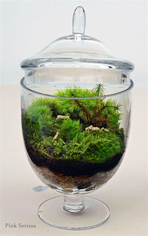 where can i buy moss for a terrarium 43 best images about my terrariums on pinterest miniature moss terrarium and glass terrarium