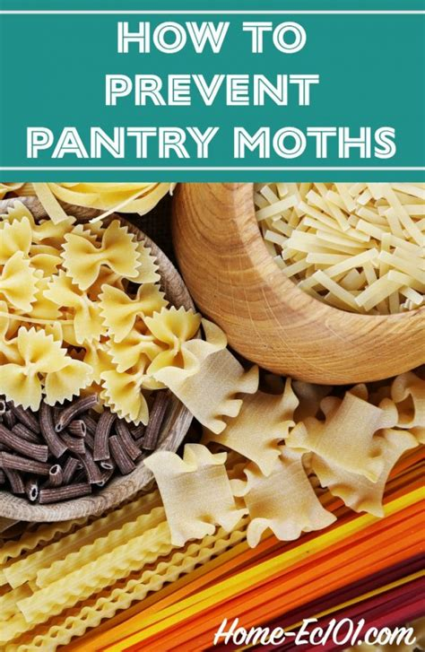 Moths In Pantry Where Do They Come From Pantry Moths In Pasta Home Ec 101