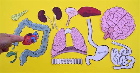 printable life size organs  studying human body