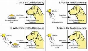 Unterschied Maus Ratte : klassische konditionierung via medici ~ Lizthompson.info Haus und Dekorationen