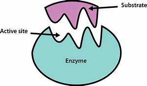 Enzymes Online Test Review