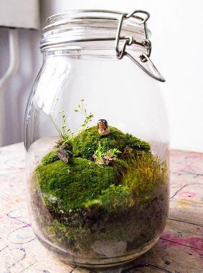 faire un terrarium guide pratique
