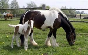 Bilder Von Pferden : entwurmung von pferden nicht nach schema f vet ~ Frokenaadalensverden.com Haus und Dekorationen