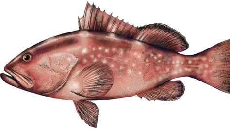 grouper florida agriculture consumer department services edible