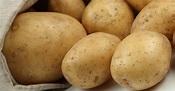 How To Avoid The New GMO Potato – REALfarmacy.com
