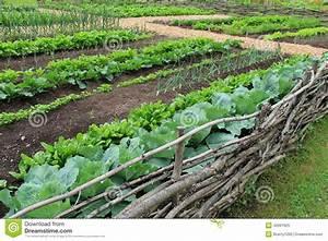 Example Of Farm To Table Garden Stock Photo - Image: 42691625