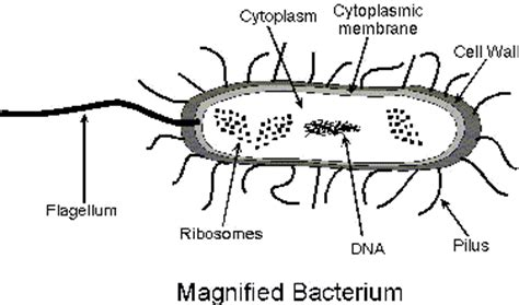 Anthrax Bacterium Diagram by Science Questions Answer Them Well And Get Your 10 Points