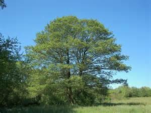 permaculture plants alder agrihunt