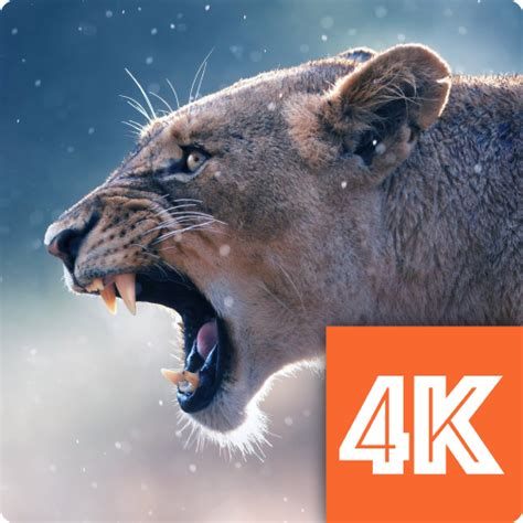 Animal 4k Wallpaper - animals wallpapers 4k for pc