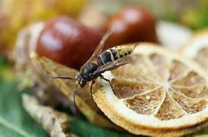 Gift Für Wespen : das k nnen sie nach einem wespenstich tun ~ Whattoseeinmadrid.com Haus und Dekorationen
