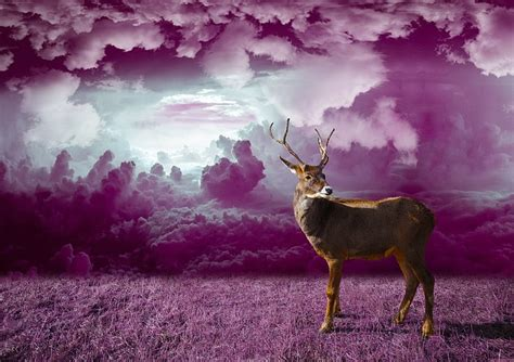 wallpaper pink motif free photo reindeer winter deer free image
