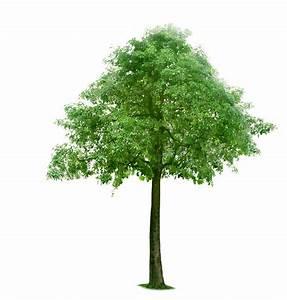 Tree 1091 - Trees - Landscape scenery