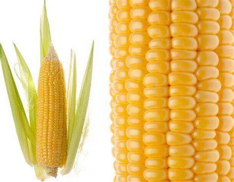 Indian Maize (Yellow Corn) Exporters, Indian Maize (Yellow ...