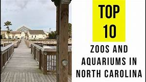 TOP 10. Best Zoos and Aquariums in North Carolina - YouTube