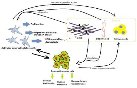 pancreatic stellate cells  conductor  dissonance
