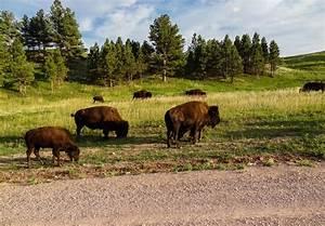 Dacota Sud Ouest : custer state park dakota du sud sunset bld ~ Premium-room.com Idées de Décoration