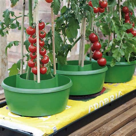 buy tomato grow pots  plant halos   cost