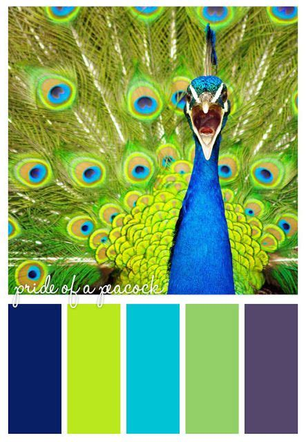 peacock color scheme peacock color scheme projects to try