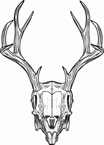 Skull Deer Drawing Horns Clipart Gargoyle Stag