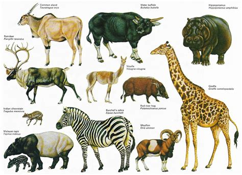 ungulate animals encyclopedia interesting facts some