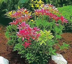 Pflanzen Japanischer Garten : 1000 bilder zu japanischer garten auf pinterest g rten ~ Lizthompson.info Haus und Dekorationen