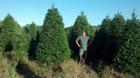 christmas tree farm central il menefees trees central tacoma tree farm christmastreefarms net
