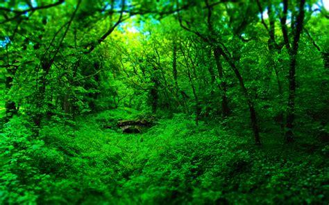 Green Forest Image Desktop by Forest Nature Wood Bridge Green Landscape Wallpapers