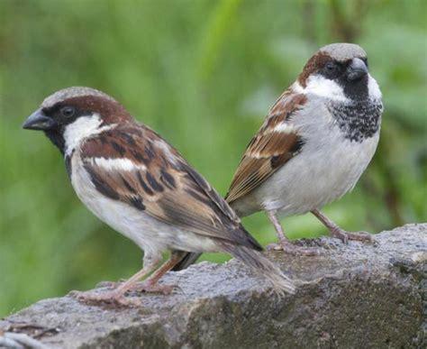 bird quizzes garden birds   common