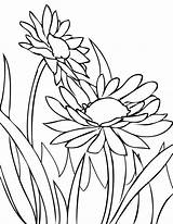 Coloring Daisy Flower Spring Fence Sun Colorluna sketch template