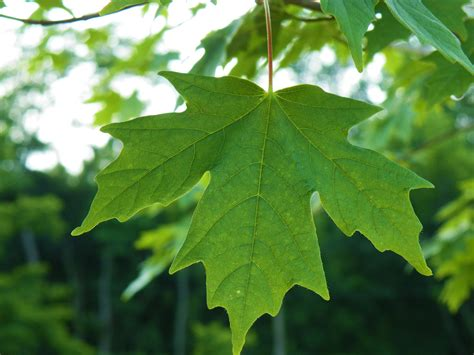 leaf tree 2 leaf anniv tree creativity sparks life