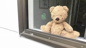 Teddy Bear Hund : prime minister jacinda ardern endorses popular teddy bear ~ A.2002-acura-tl-radio.info Haus und Dekorationen