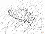 Bug Potato Coloring Pages Template Bed sketch template